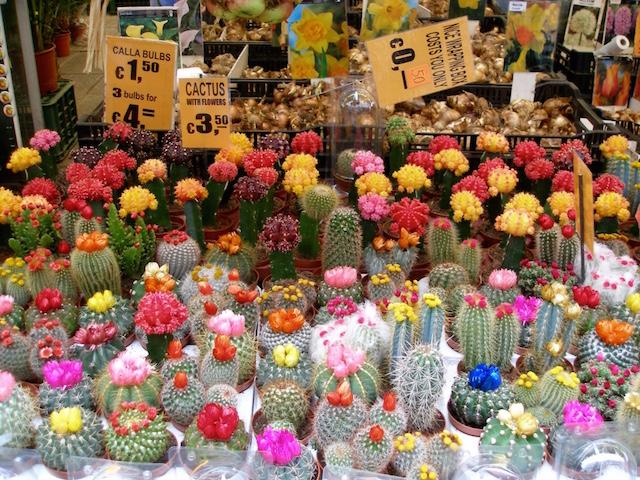 playlist de cactus à Amsterdam