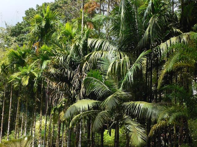 image Jamaïque
