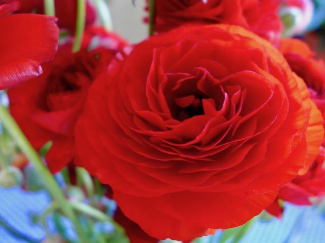Bécaud la rose