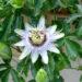 Une fleur unique